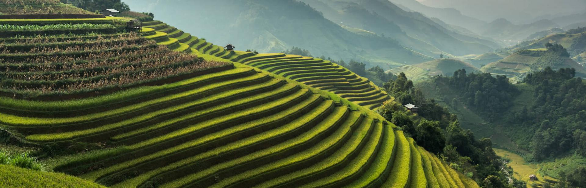 View of a stepped rice paddy with mountains in the background.