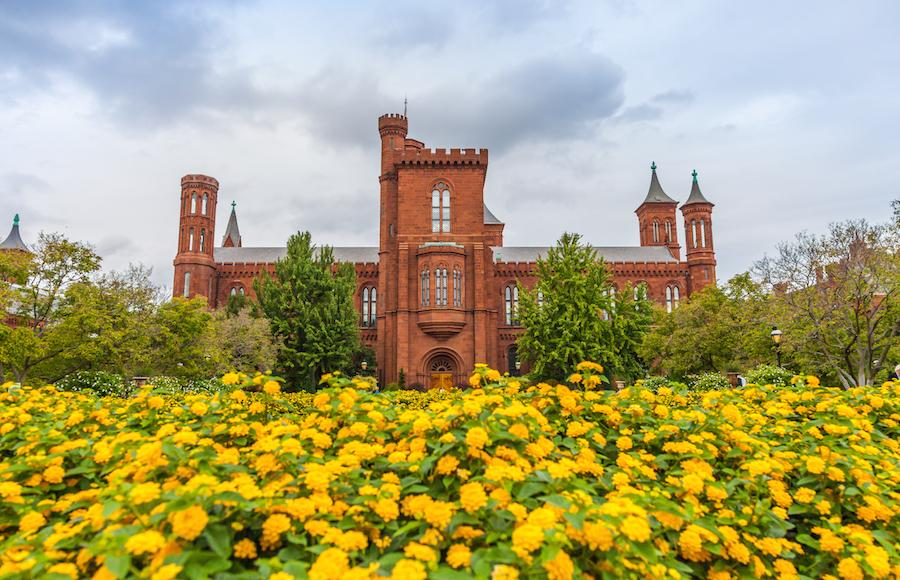 Smithsonian castle with yellow flowers in the foreground