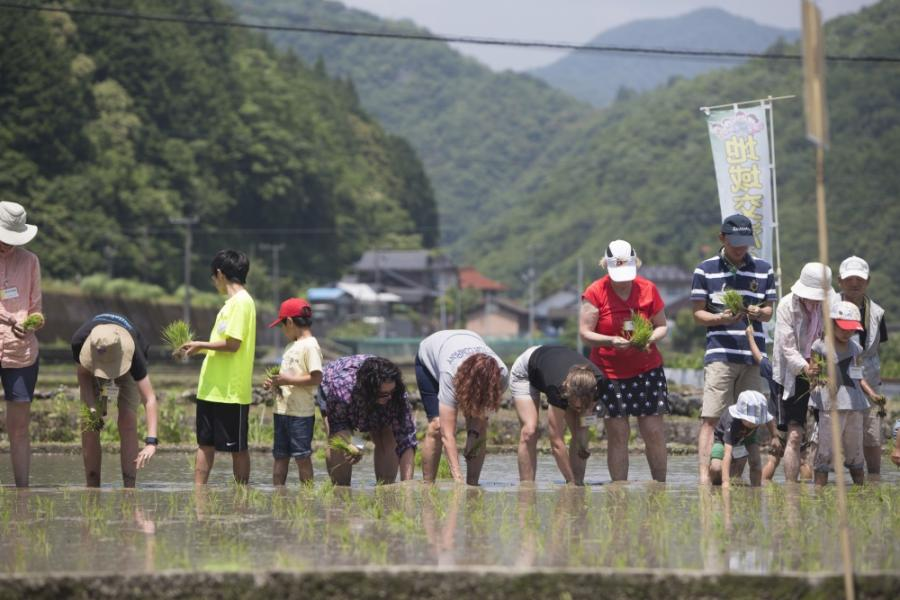 Residents of Marine Corps Air Station Iwakuni and Iwakuni City plant rice in Iwakuni City, Japan