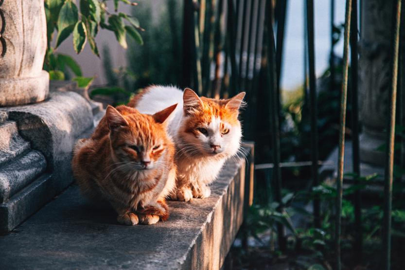Two cats sitting on concrete.