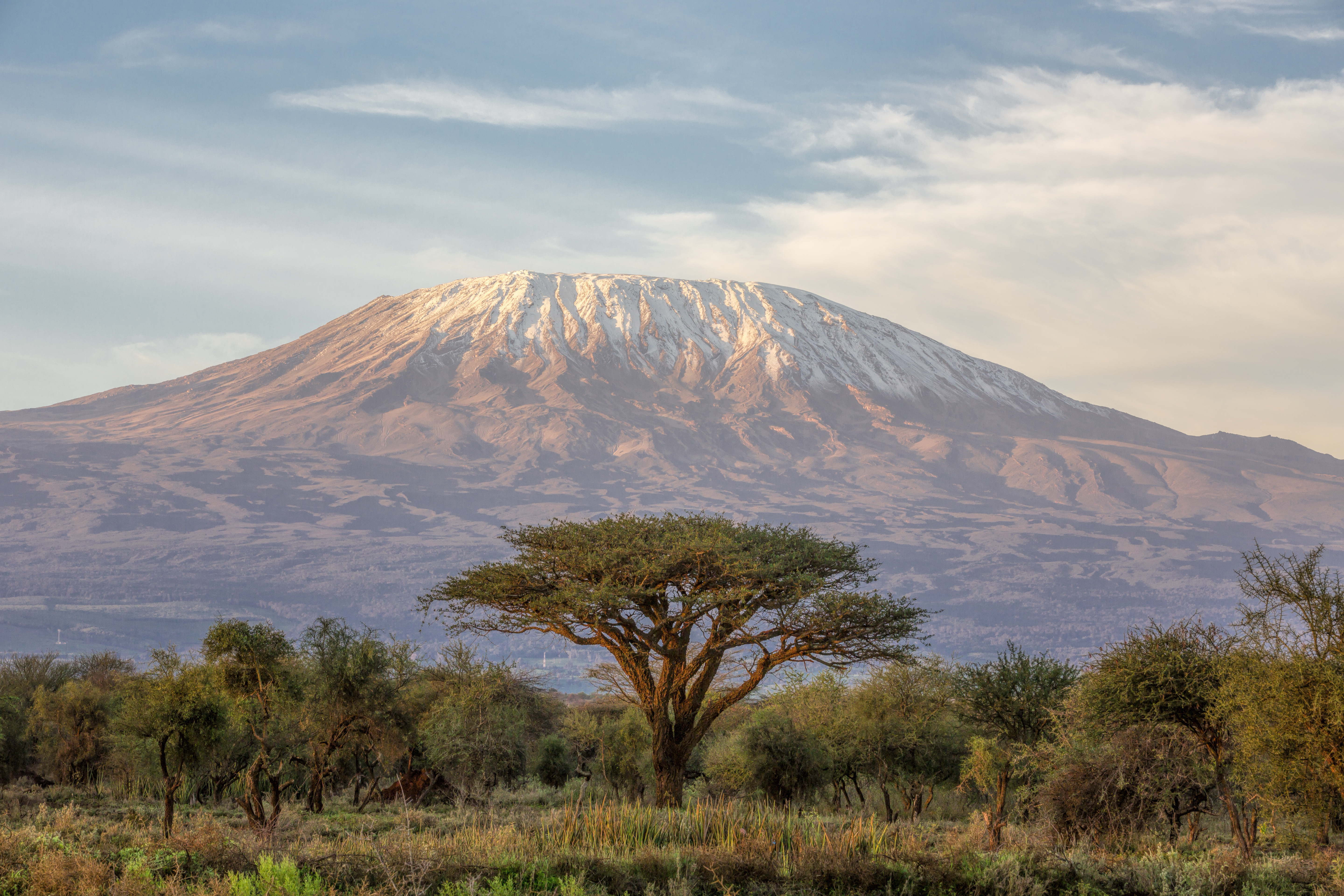 Acacia tree in Amboseli, with Mount Kilimanjaro rising in the background.